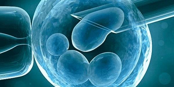 inyección de placenta en células